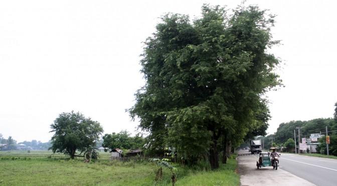 CNE1周辺は田舎